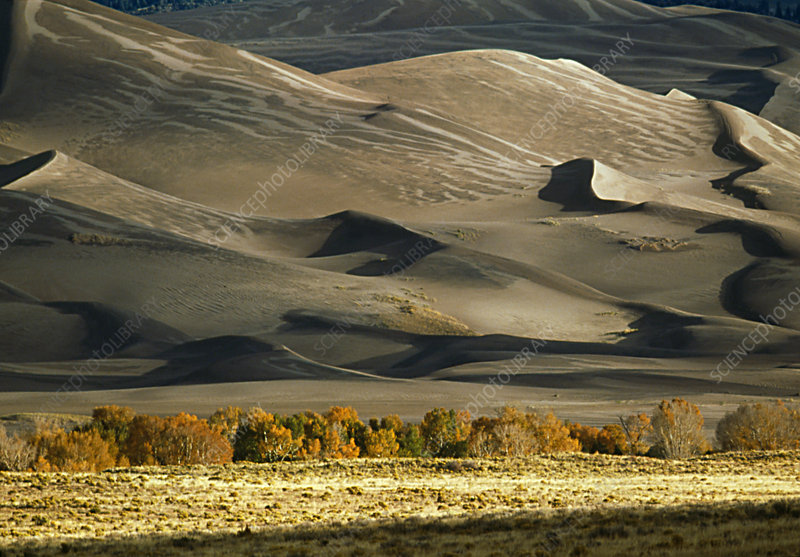 View of desert sand dunes and cottonwood trees
