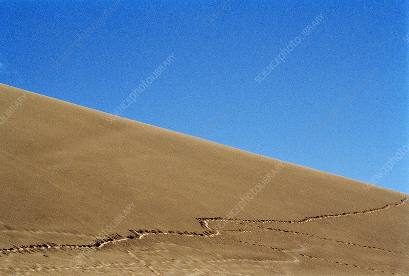 Tracks in a sand dune
