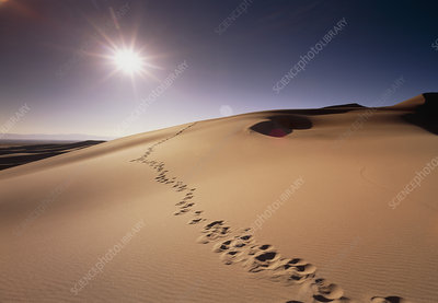 Footprints over sand dunes
