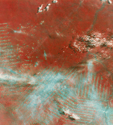 Landsat image of rainforests, western Brazil