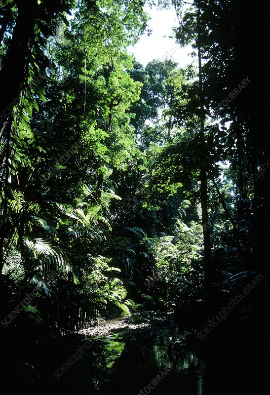 Lush undergrowth of topical rain forest,Australia