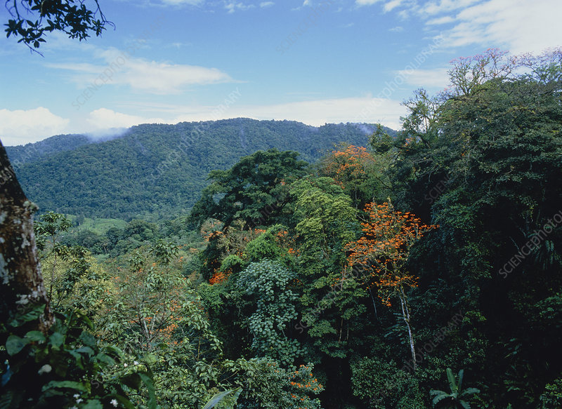 View across rainforest in Trinidad