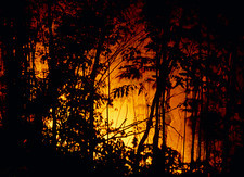 Forest fire burning in rainforest