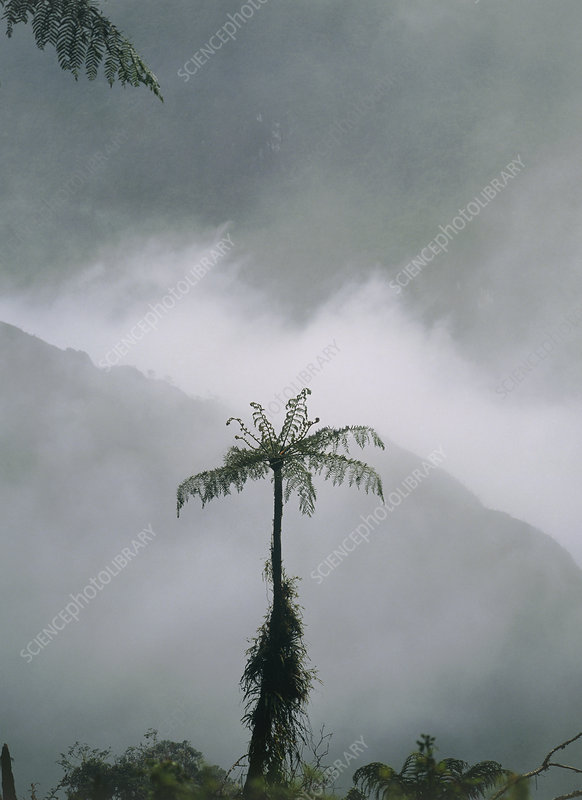 Area of cleared cloudforest, Juval valley, Ecuador