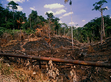 Colonisation of the Amazonian rainforest