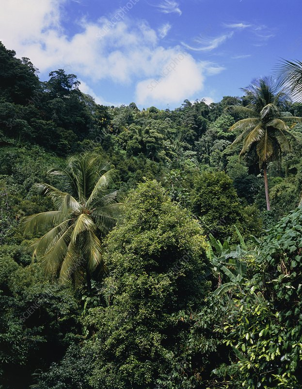 The forests of Grenada