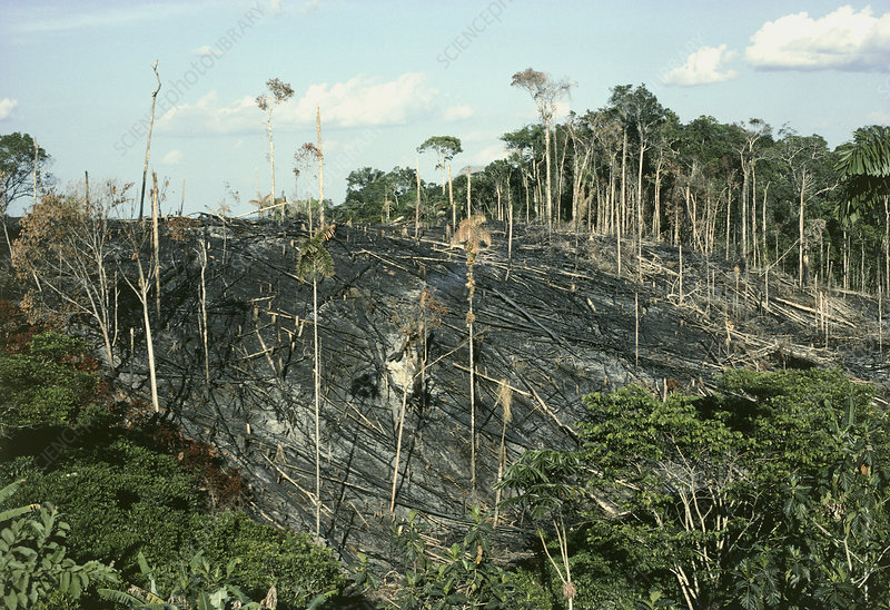 Rainforest burnt for crop-planting, Ecuador.