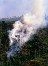 View of a forest fire in the Amazonian rainforest