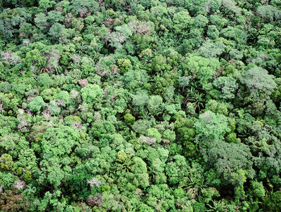 Aerial view of rain forest, Central America