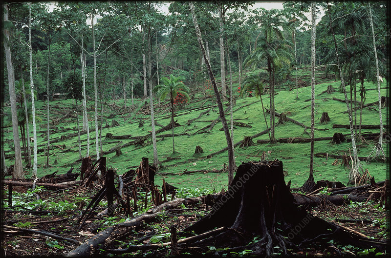 Deforestation by slash and burn, Costa Rica