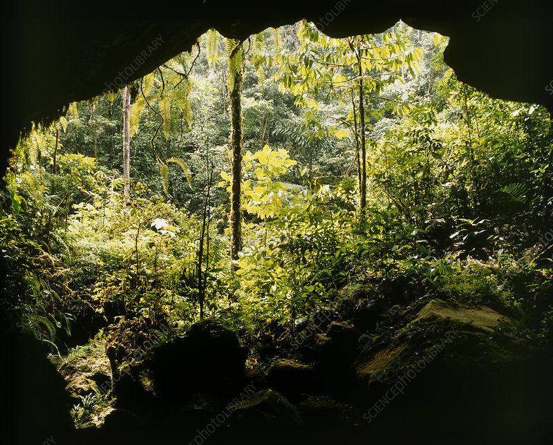 View from cave mouth into rainforest