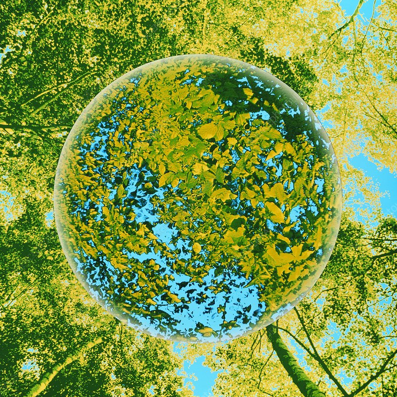 Coloured photo of globe of leaves in forest