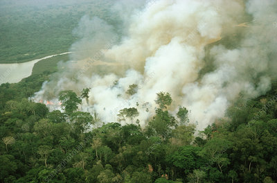 Rainforest being burned for agriculture.