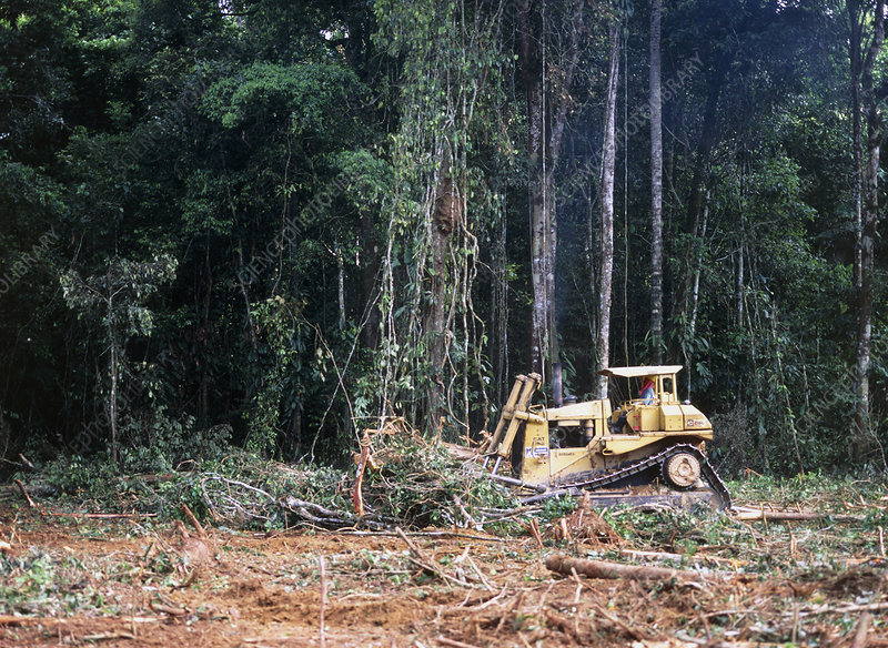 Tractor clears rainforest to build an oil well