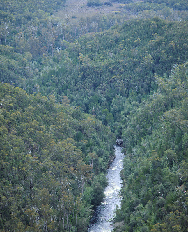 View of temperate rainforest with river, Tasmania