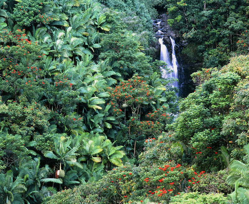 Tropical forest surrounding waterfall