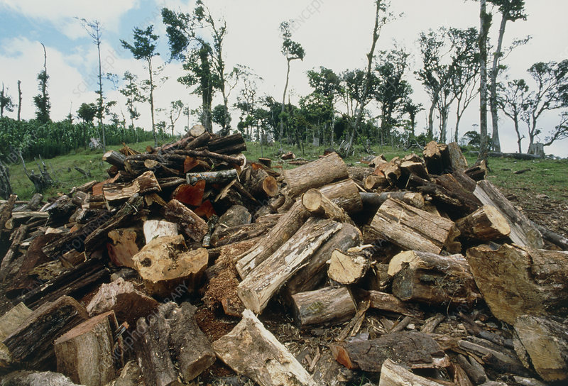 Pile of cut tree trunks in deforested Costa Rica