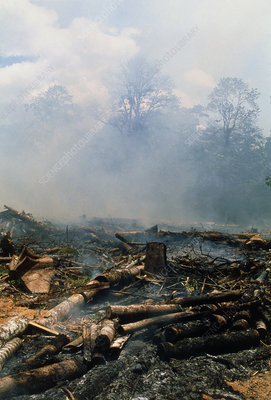 Felled trees being burned in deforested rainforest