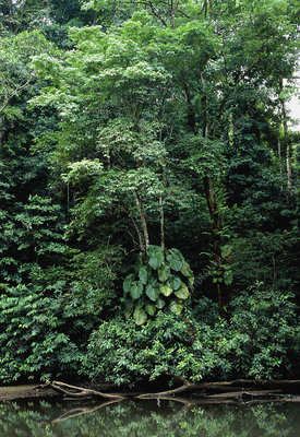 Tropical rainforest in Costa Rica