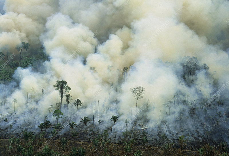 Burning rainforest to clear land for cattle