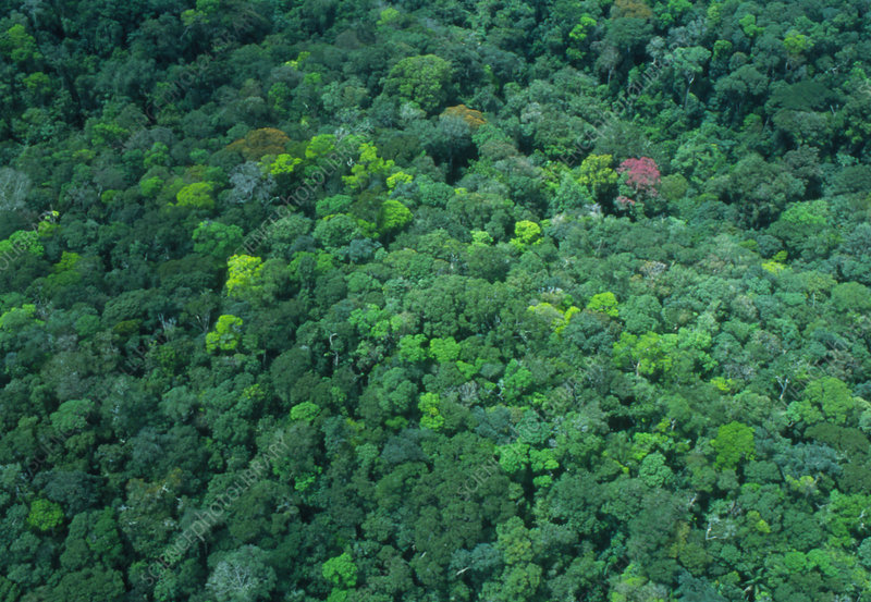 Aerial view of a forest in Guyana
