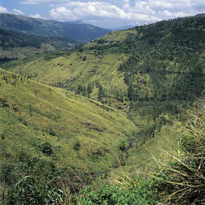 Deforested valley