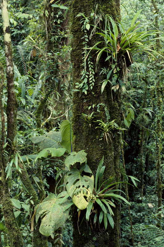 Tree trunk covered with epiphytes