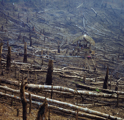 Slash & Burn deforestation