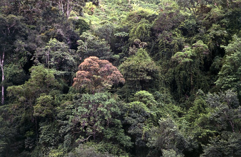 Mountain rainforest