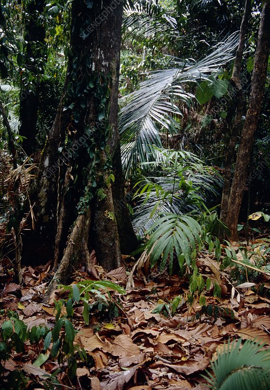 Rainforest understorey