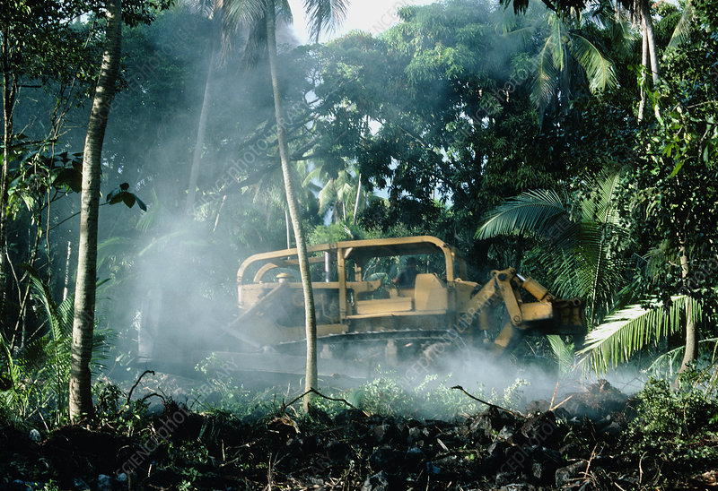 Bulldozing a rainforest, Hawaii