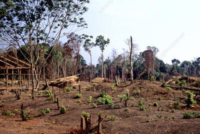 'Forest clearance, Cambodia'