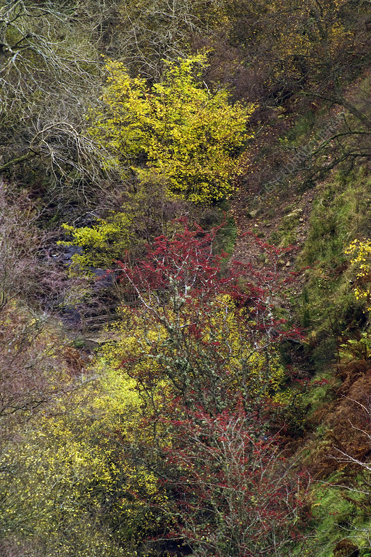 Autumn foliage in woodland