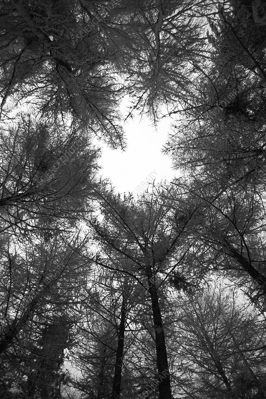 Forest canopy