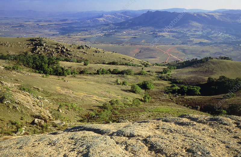 grassland food chain. grassland food chain