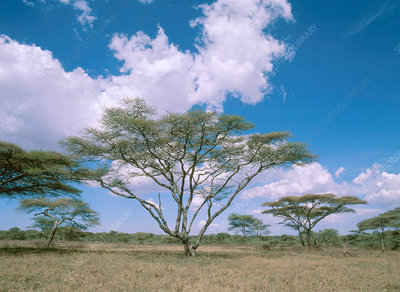 Wooded Grassland in Tanzania