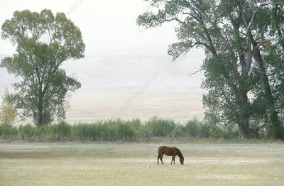 Colorado pasture with horse