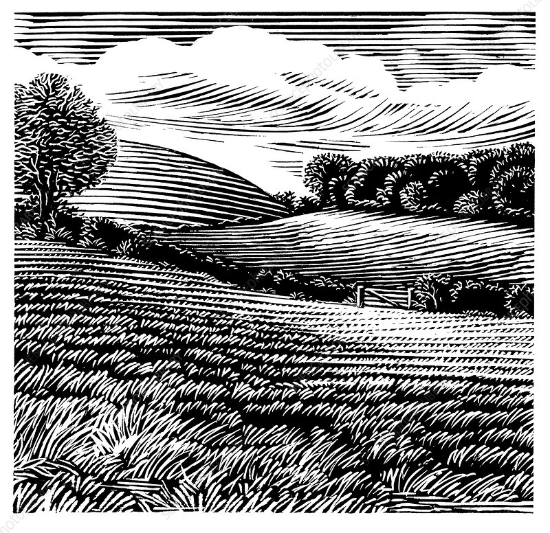 Rural landscape, woodcut