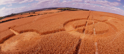 Crop formation, Cheesefoot, Hampshire