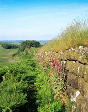 Plants on Hadrian's Wall