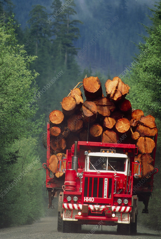 Logging truck loaded with logs