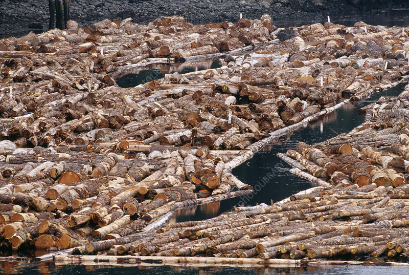 Log booms in Vancouver Island