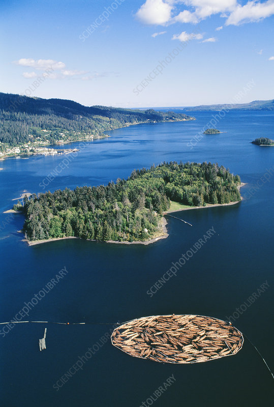 Aerial view of felled timber logs on water
