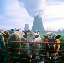 Cows and cooling towers