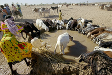 Sourcing water for livestock