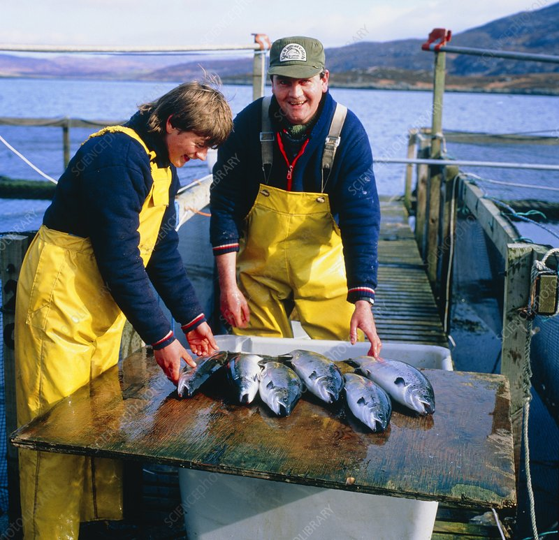 Workers at a salmon farm in Scotland.