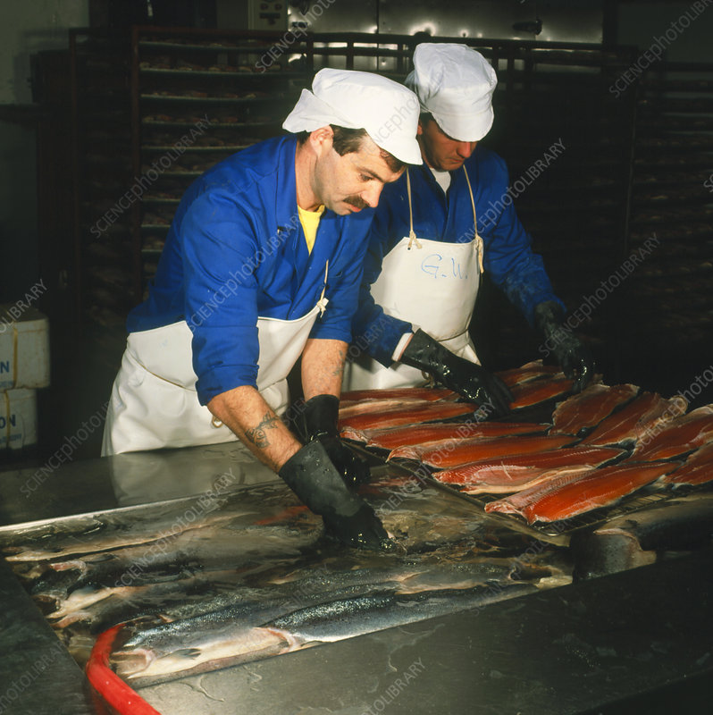 Workers at a salmon smokery, Scotland.