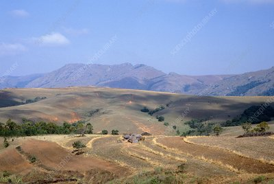 Traditional field and farm in Swaziland