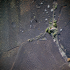 Vineyard on volcanic rock