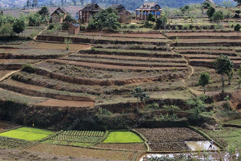 Terraced farmland stock image e768 0343 science photo for Terrace farming model